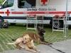 VI Jornadas de Gerencia de Riesgos y Emergencias, Donosti 25.05.2012